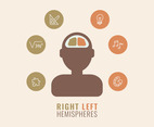 Differences Between Right And Left Hemispheres