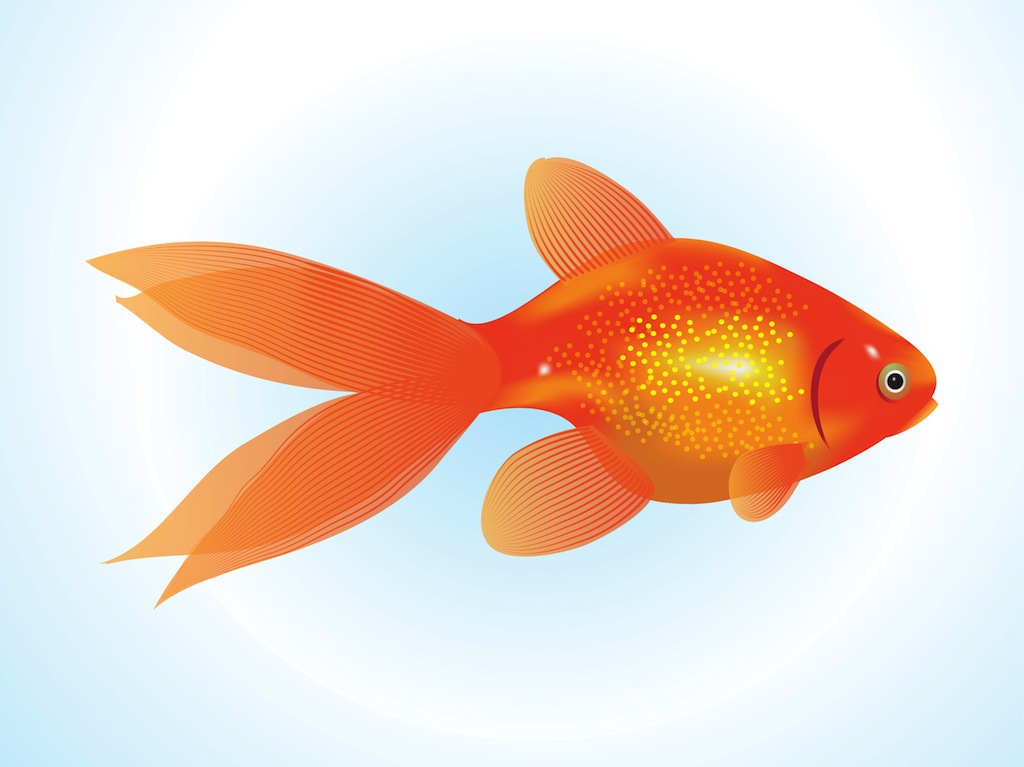 Goldfish vector for Fish for gold