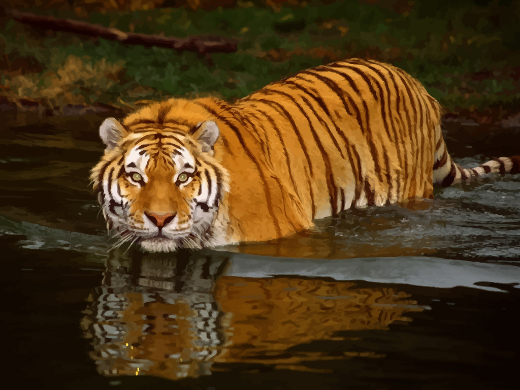 Free Wildlife Pictures Wildlife Tiger