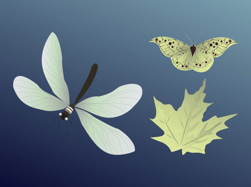 Insects And Leaf
