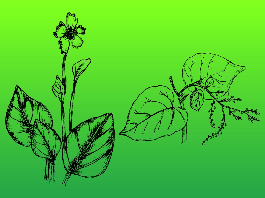 Hand-Drawn Plants