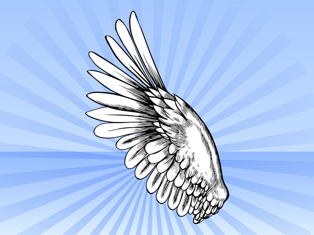 Bird Wing Vector