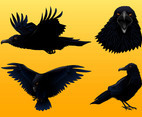 Crow Graphics Set