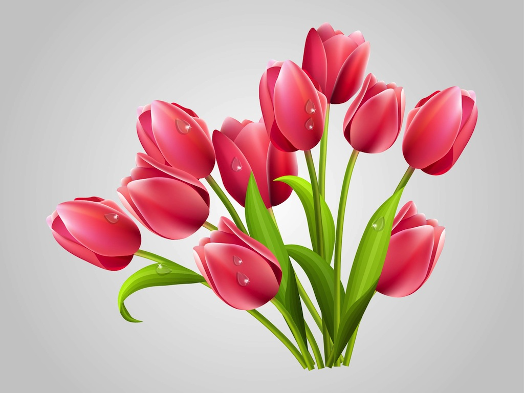 realistic tulips vector art u0026 graphics freevector com
