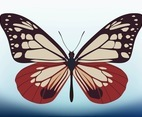 Butterfly Vector Design