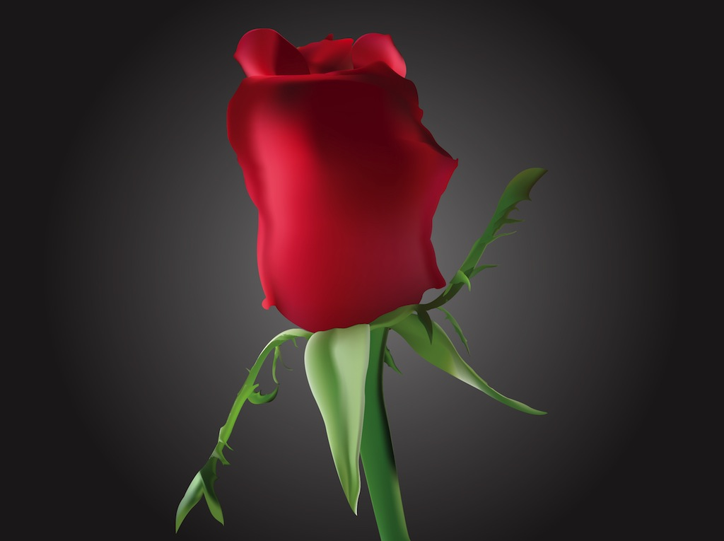 Romantic Rosebud